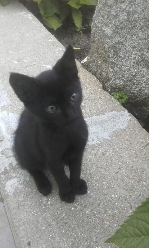 Oudini, chaton mâle noir, né le 12.04.2018 B1d7b310