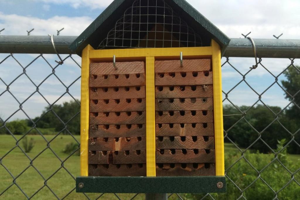 Mason bees - Page 3 Bee_ho13
