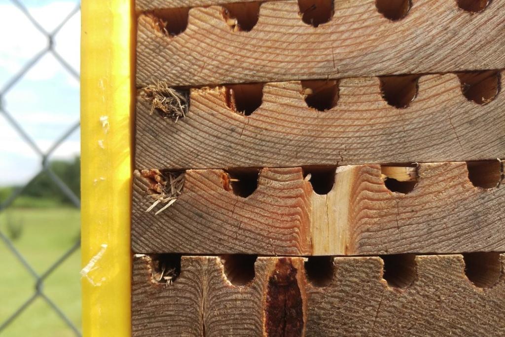 Mason bees - Page 3 Bee_ho15