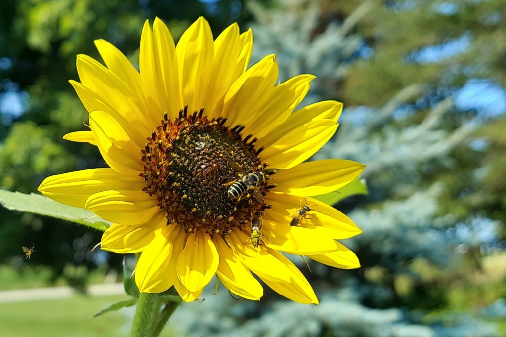 Butterfly/Pollinator Havens - Which plants are your favorite to cultivate? - Page 4 Bee_on10