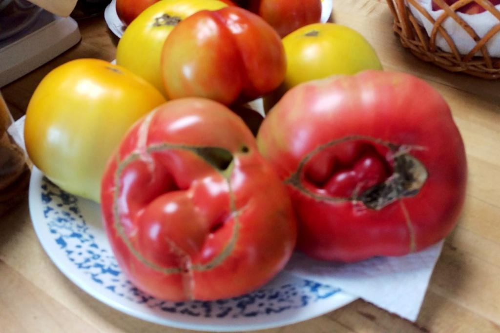 Tomato Tuesday - 2020 Brandy16