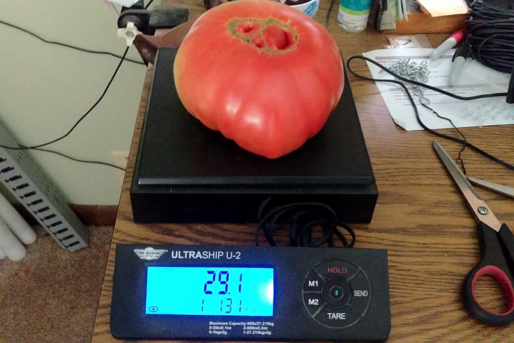 Tomato Tuesday - 2020 Brandy17