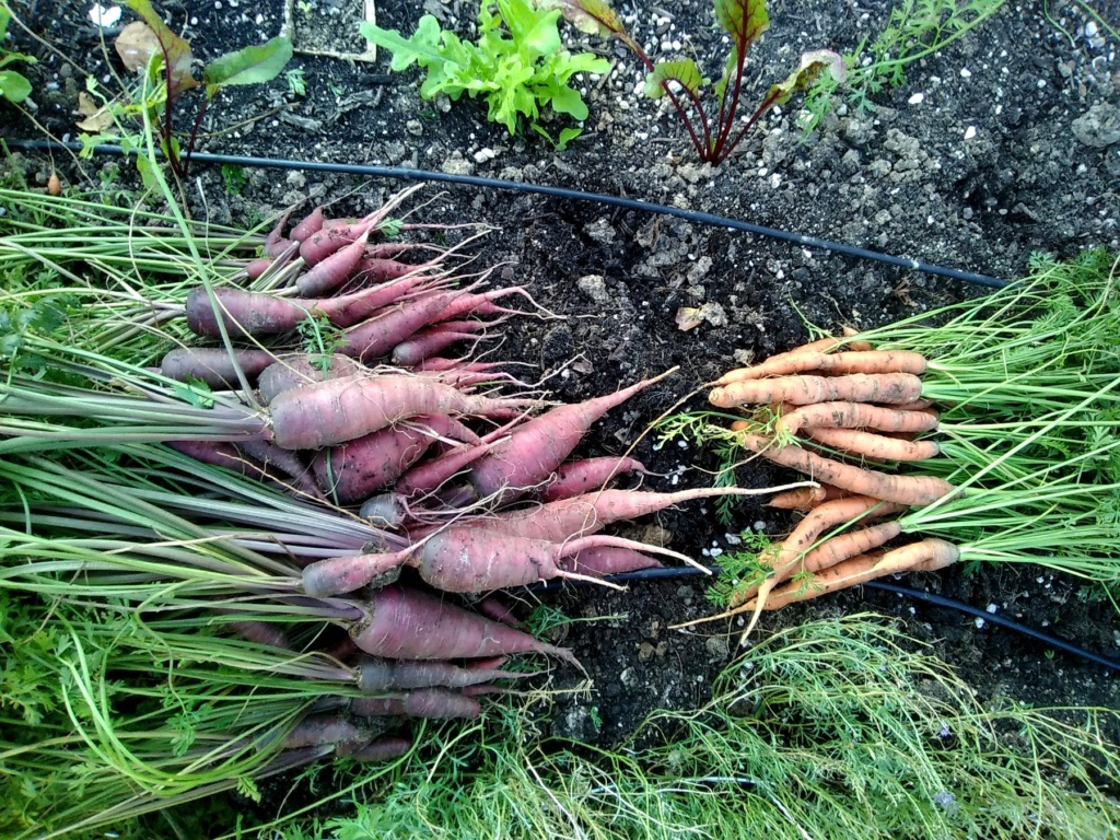N&C Midwest:  October 2018 Carrot10