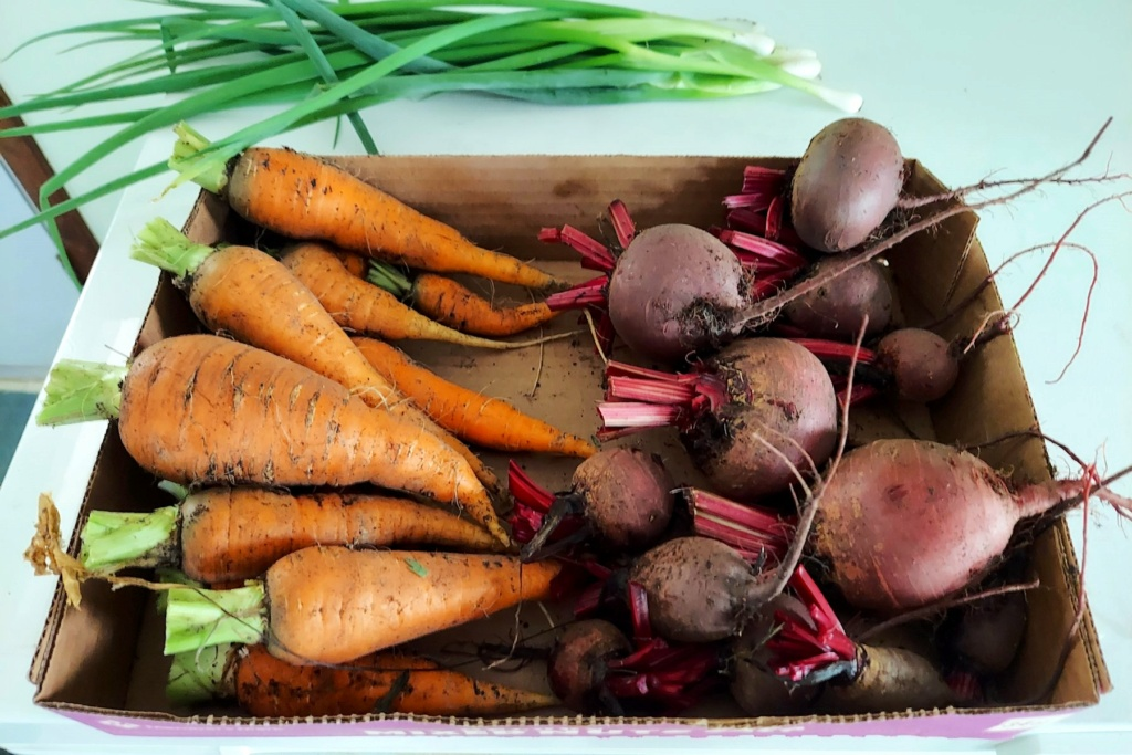 What Have You Picked From Your Garden Today - Page 9 Carrot25