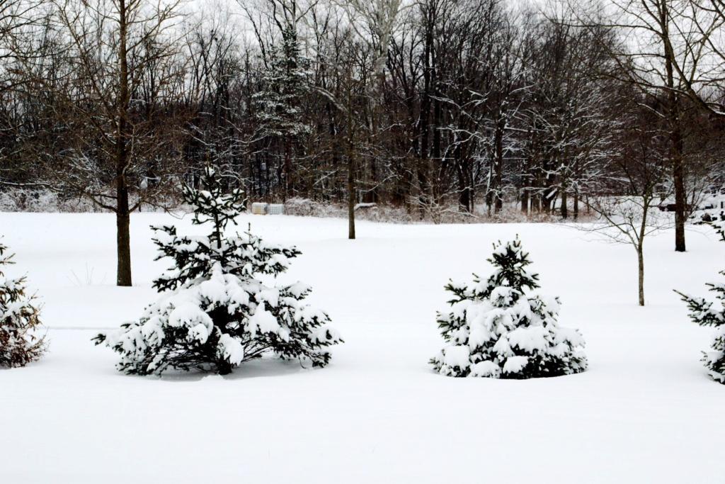 N&C Midwest: January/February 2019!  Dsc_0010