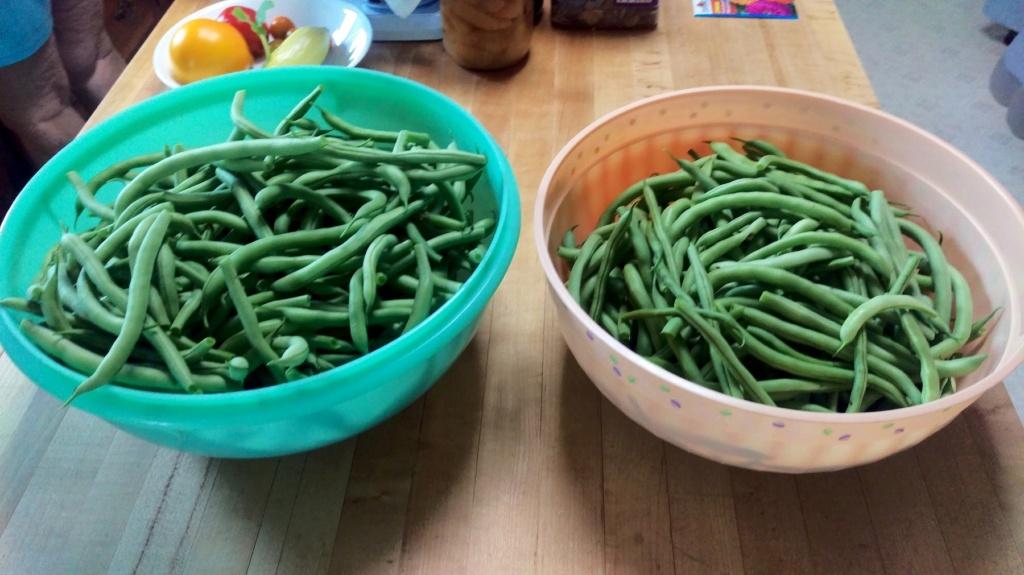 Pull Bean Plants to Pick Beans? Green_30