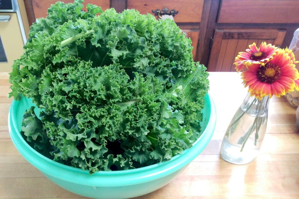 What are you eating from your garden today? - Page 39 Kale11