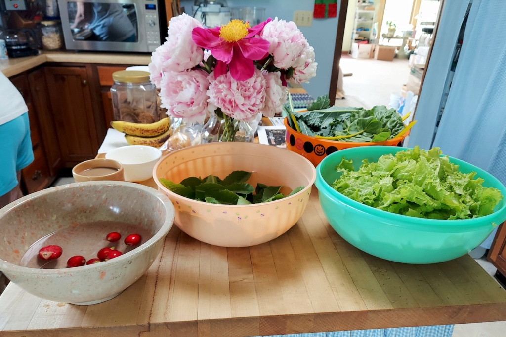 What are you eating from your garden today? - Page 14 Lettuc18