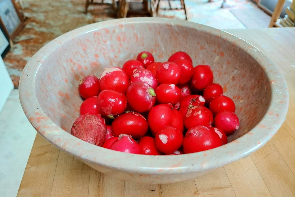 What are you eating from your garden today? - Page 14 Radish14