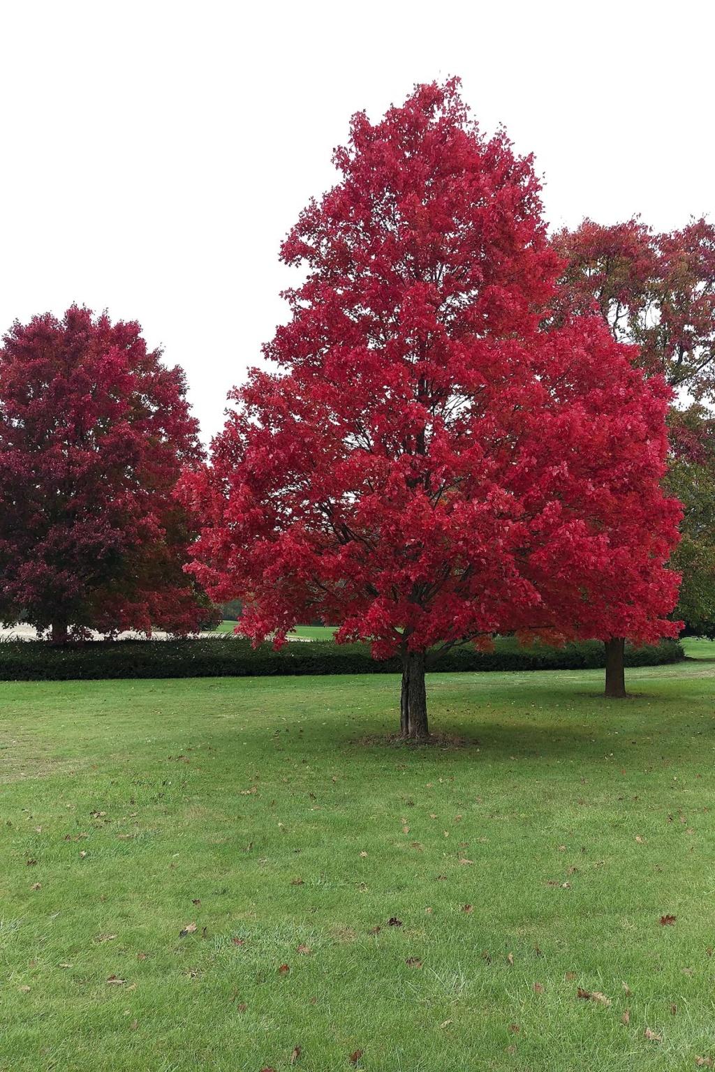October Avatar: Fall Gardening Red_ma10