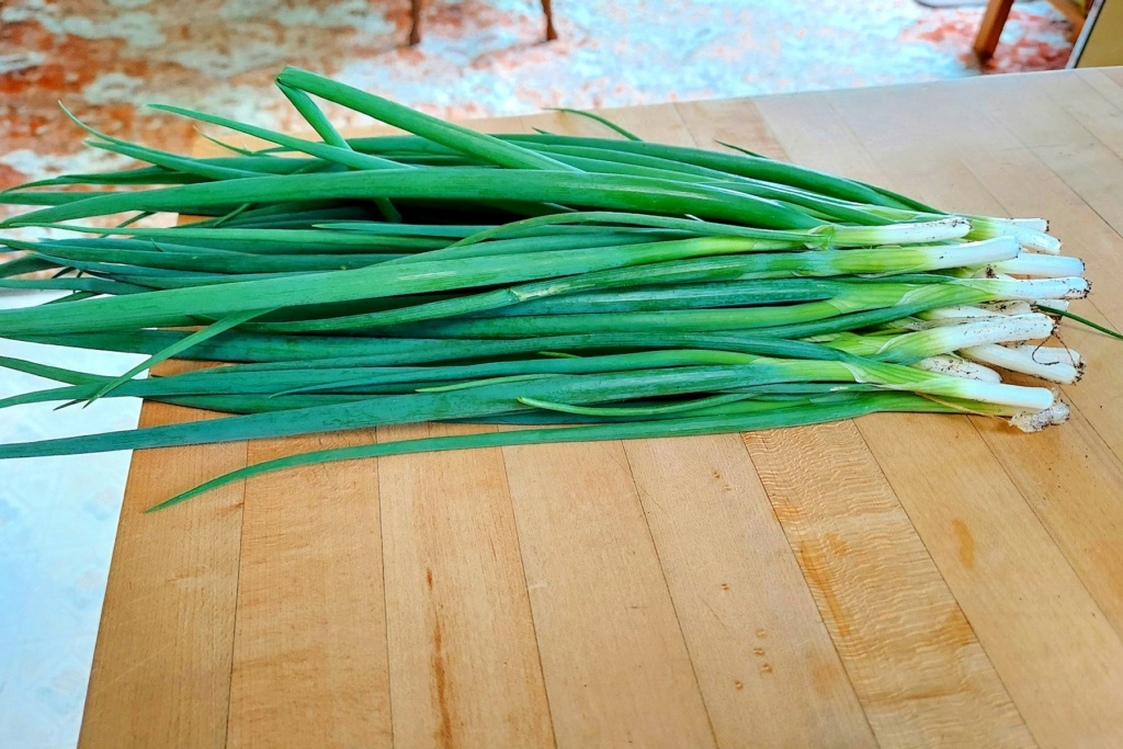 What are you eating from your garden today? - Page 14 Spring20