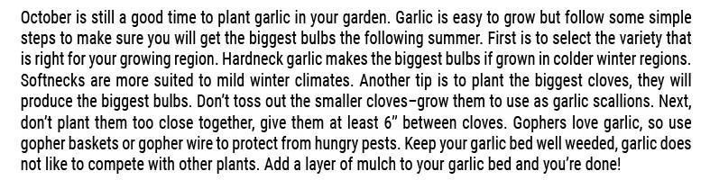 Garlic SFG Tips_f10