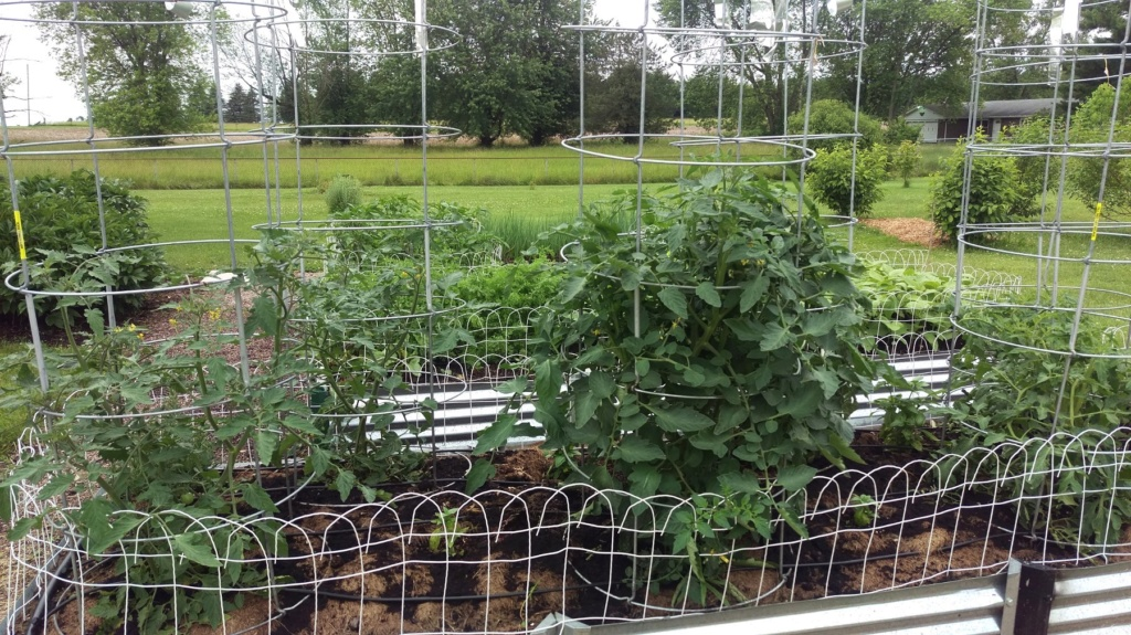 N&C Midwest:  June 2019! Tomato32
