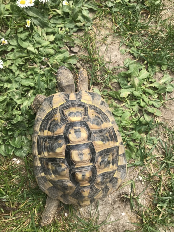 identification de mes tortues Image25