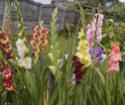 Наши цветы - Страница 27 Dsc_0210