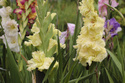 Наши цветы - Страница 27 Dsc_0211