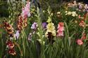 Наши цветы - Страница 27 Dsc_0212
