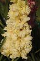 Наши цветы - Страница 27 Dsc_0310