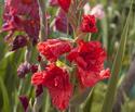 Наши цветы - Страница 27 Dsc_0311