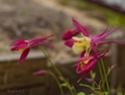 Наши цветы - Страница 27 Dsc_9010