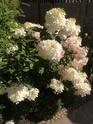 Наши цветы - Страница 27 Img_1210
