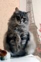 Сама по себе гулёна (о кошках) - Страница 3 Img_2010