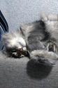 Сама по себе гулёна (о кошках) - Страница 3 Img_2011