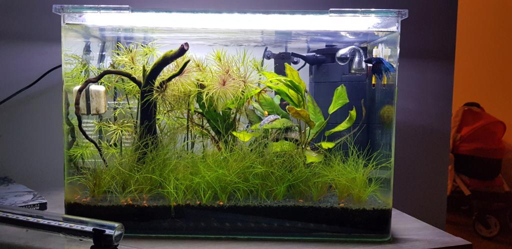 Eau surface aquarium grasse. 20190614