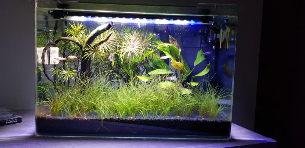 Eau surface aquarium grasse. 20190615