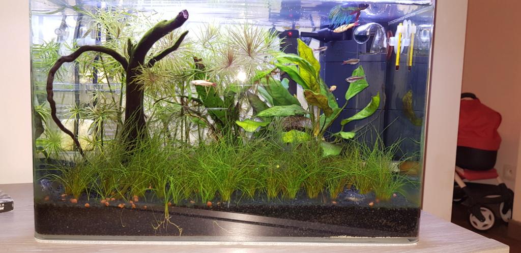 Eau surface aquarium grasse. - Page 2 20190616