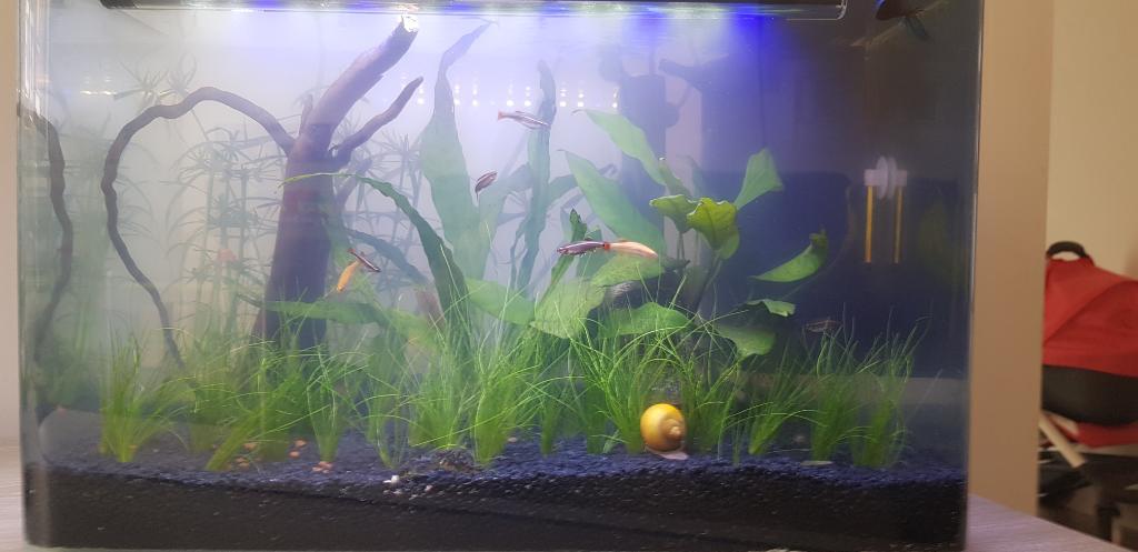 Eau aquarium trouble blanchatre - Page 2 Rps20116