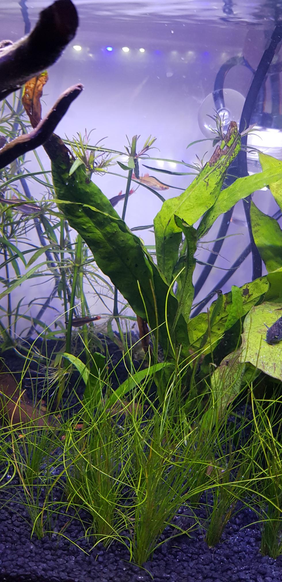 Eau aquarium trouble blanchatre - Page 3 Rps20123