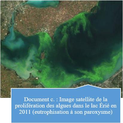 L'eutrophisation, un nouvel enjeu environnemental à redouter C10