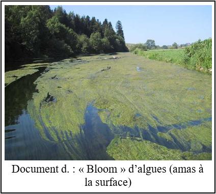 L'eutrophisation, un nouvel enjeu environnemental à redouter D11