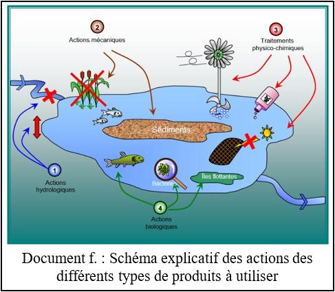 L'eutrophisation, un nouvel enjeu environnemental à redouter F10