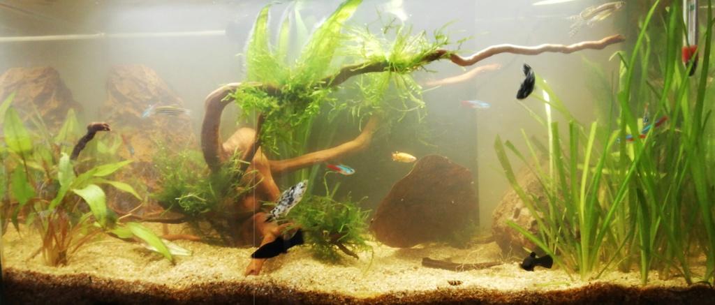 1er aquarium de débutant 60l10