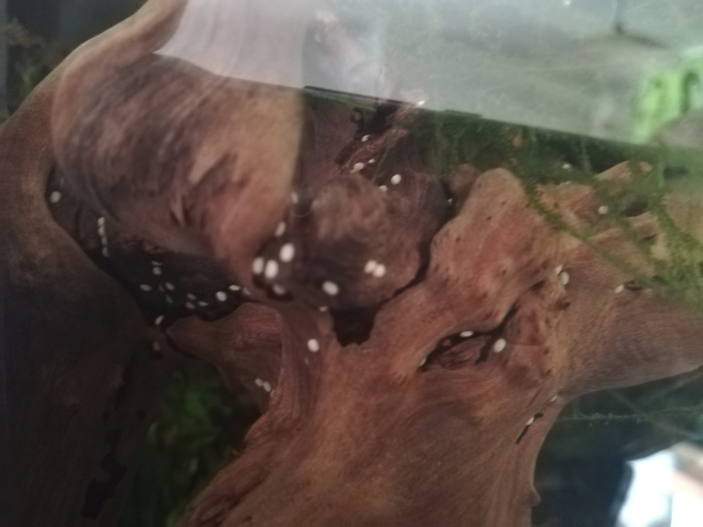 [HELP] Oeuf, larve? qu'est-ce? Img_2021