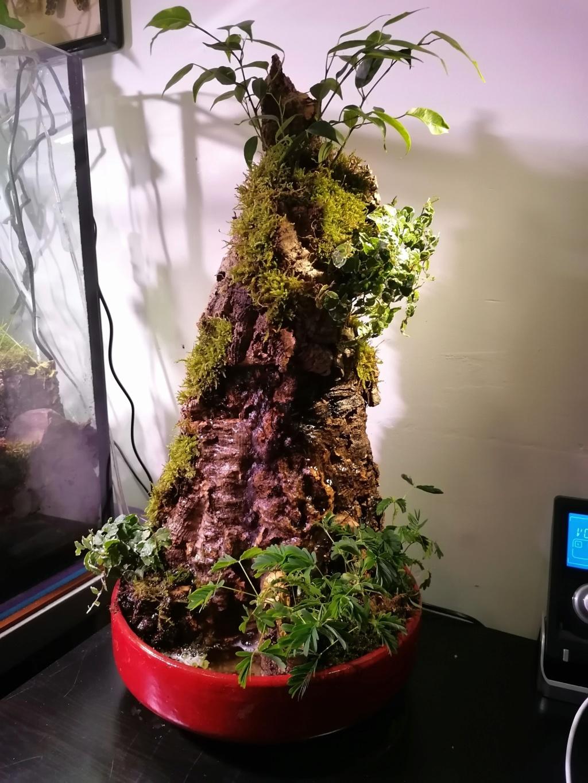 fontaine végétale  Img_2066