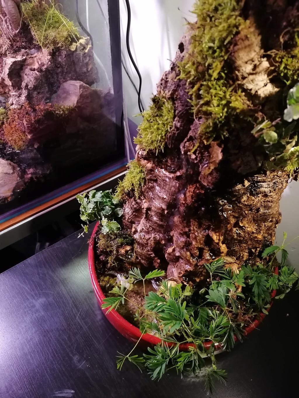 fontaine végétale  Img_2067