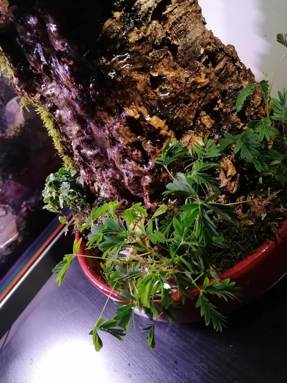fontaine végétale  Img_2069