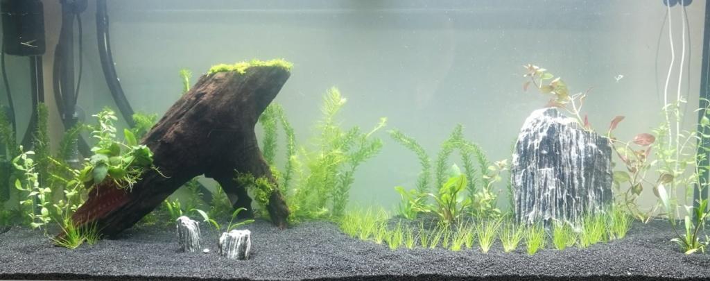 Benakath - Aquarium n°1 - 240L 01_ins10