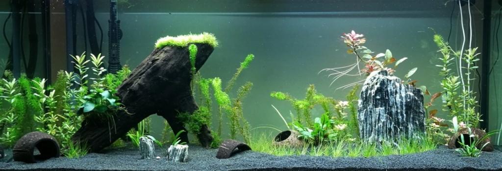 Benakath - Aquarium n°1 - 240L 02-apr10