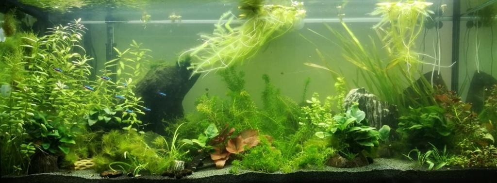 Benakath - Aquarium n°1 - 240L 06_apr10