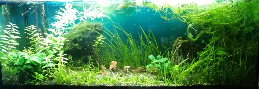 Benakath - Aquarium n°1 - 240L 10_apr10