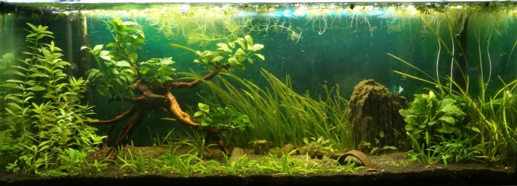 Benakath - Aquarium n°1 - 240L 11_mod10