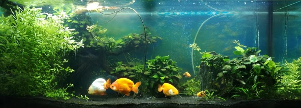 Benakath - Aquarium n°1 - 240L Bac_2410