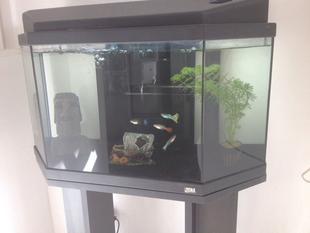 nouvelle aquarium de 60 litres Image14