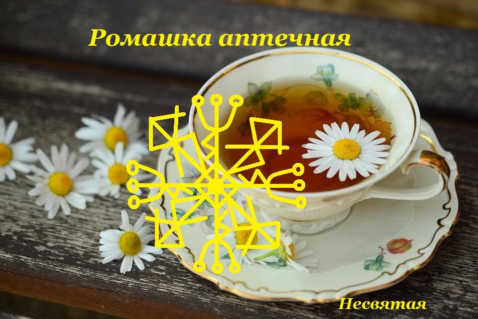 """Став """"Ромашка аптечная"""" от Несвятая Ea_ei_10"""