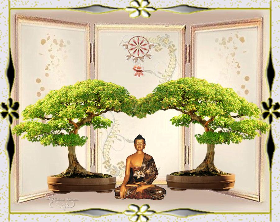 Défi Zen/bouddha,bonsai 8af00810