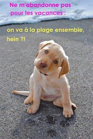 *Les bébés de vos petites chiennes * Photo_17